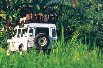 Visite en petit groupe : forêt tropicale de Bali en 4X4