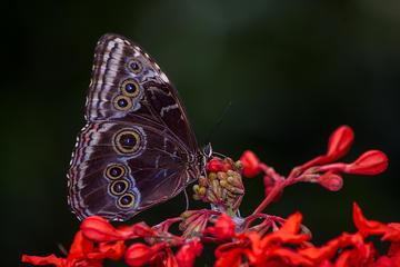 Jardín de Mariposas en Monteverde