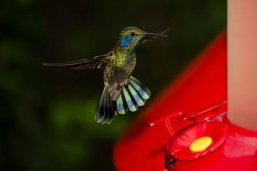 Selvatura Park: Jardín de Colibrís y visita al Museo de insectos