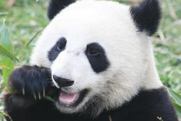 Dagstur fra Hong Kong til Guangzhou (Kanton) på det kinesiske...