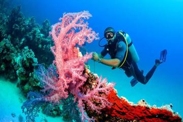 From Hurghada: 2-Hour Trip by...