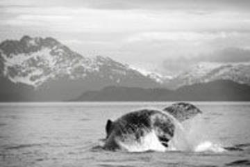 Avvistamento delle balene a Juneau e tour del ghiacciaio Mendenhall