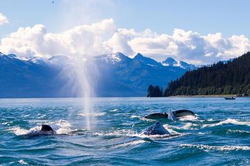 Crucero de avistamiento de ballenas en Juneau