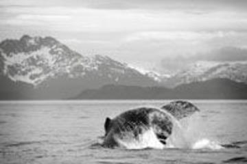 Excursión de avistamiento de ballenas y glaciar Mendenhall en Juneau