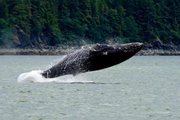 Excursión por la costa: Aventura de avistamiento de ballenas con el...