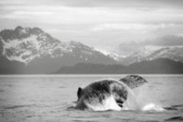 Juneau: Bootstour mit Walbeobachtung und Mendenhall-Gletscher