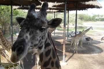Bangkok Safari World Zoo y Marine Park