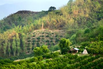 Excursion d 'une journée au Chiang Rai et au triangle d'or au départ...