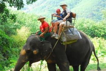 Paseo en elefante de una hora por la selva de Phuket