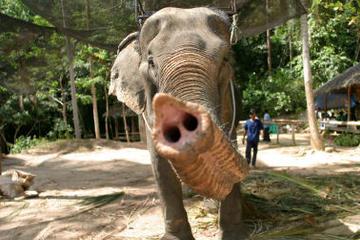 Safari sur l'île de Koh Samui et promenade à dos d'éléphant