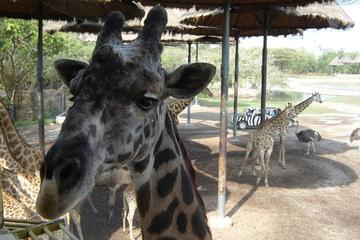 Tour vanuit Bangkok naar Safari World Zoo en Marine Park