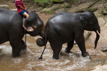 Visite d'éléphants au travail de Chiang Mai