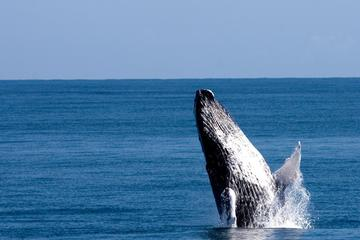 Samana Whales Watching Supreme Discovery Full Day and