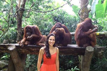 シンガポール動物園ツアー、オランウータンと一緒…