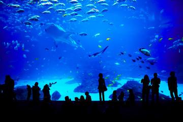 シンガポール セントーサS E A 水族館™の…