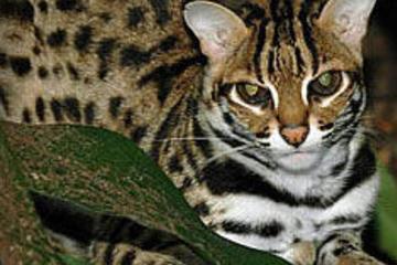 Private Tour: Nachtsafari im Zoo von Singapur mit optionalem...