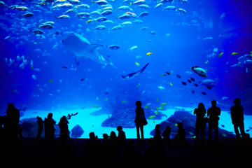 Sentosa S.E.A. Aquarium™ Admission in Singapore with Optional Hotel...
