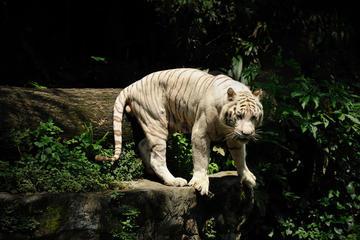 Singapur Super Saver: Safari nocturno más safari por el río