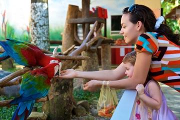 Visite du Jurong Bird Park à Singapour
