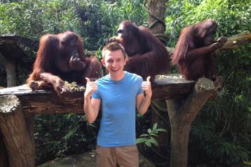 singapore-visite-zoo-avec-petit-dejeuner