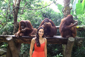 Zoo von Singapur mit Transfer und optionalem Frühstück mit Orang-Utans