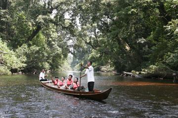 Aventure Taman Negara de 3jours au départ de Kuala Lumpur