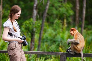 Excursão de 3 dias saindo de Sabah: passeios turísticos em Sandakan e...