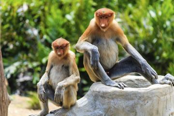 Ganztägige Tour ab Kuching zum Bako Nationalpark