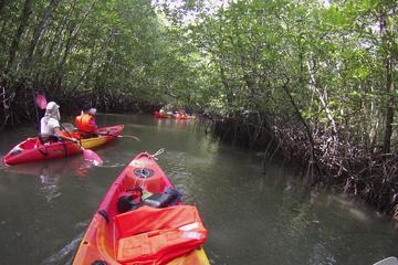 Mangrove Kayaking Experience from Langkawi