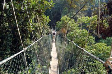 Privétour: tour naar het regenwoud van Kuala Lumpur en loopbrug