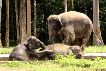 Private Tour: Elephant Orphanage...