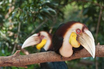 Private Tour: Langkawi Rainforest Trekking Adventure