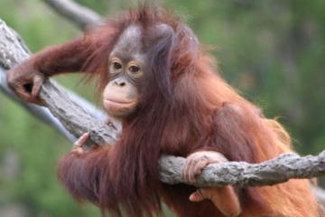Recorrido desde Kuching al Centro Matang Wildlife Rehabilitation y al...