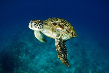 Tagesausflug von Kuching zum Schildkrötenreservat der Satang-Inseln...