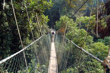 Visite privée: excursion dans la forêt tropicale et le Canopy...