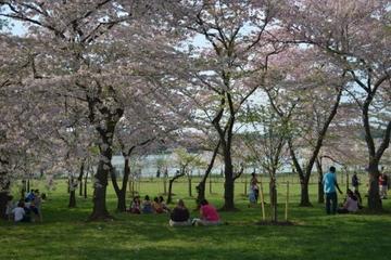 Tour Découverte des cerisiers en fleur en Segway à Washington DC