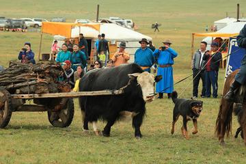 Nomadic Festival
