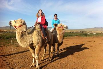 Overnight Semi-Gobi Tour Including Lunch And Free Camel or Horseback Ride