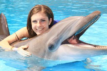 Encuentro con delfines en Cabo