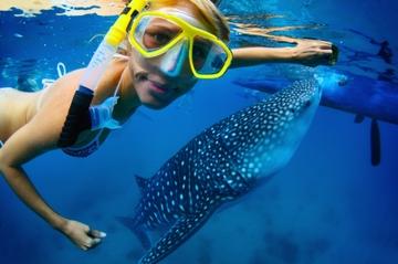 Recorrido de buceo de superficie con tiburones ballena en La Paz y...
