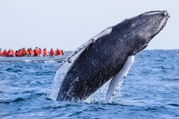 Whale Watching Photo Safari Tour in Los Cabos