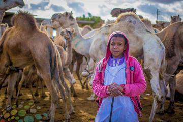 camel market day tour