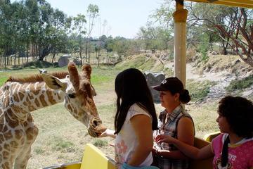 Guadalajara Zoo All-Inclusive...