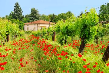 Rundfahrt - Die Toskana an einem Tag ab Rom