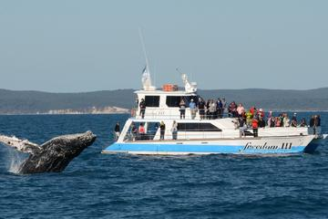 Hervey Bay Premium Whale Watching...