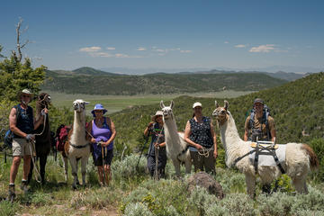 Hiking Adventure with Pack Llama Rentals