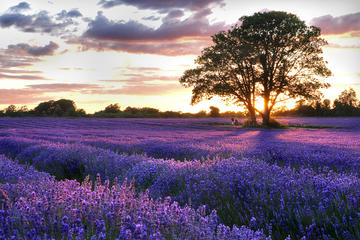 Full-Day Provence Villages and Lavender Fields Tour from Avignon