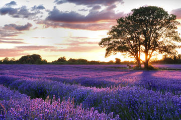PRIVATE Full Day Provencal Villages and Lavender Fields Walking Tour...