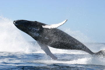 Whale Watching and Cayo Levantado...