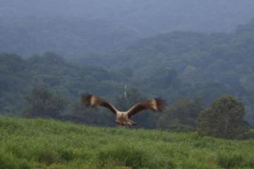 Bird Watching Tour in Tarcoles